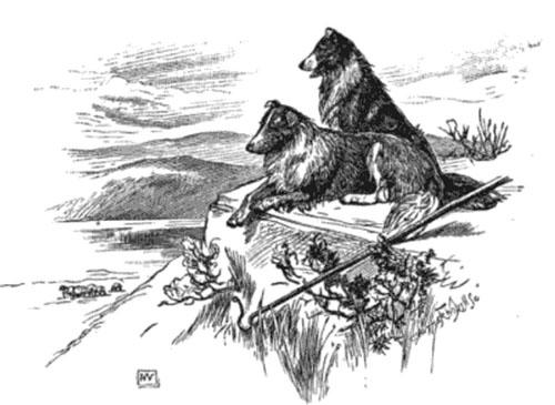 sheepdog1