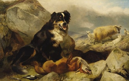 sheepdog11