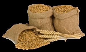 Wheat_Grain