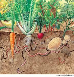 Earthworms_garden-289x300