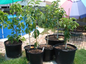 PottedTrees
